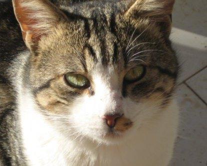L'umanità di un gatto