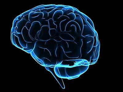 Cervello, niente più evoluzione e QI rilevato dal browser