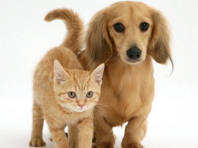 Animali più umani di quanto non possiamo immaginare