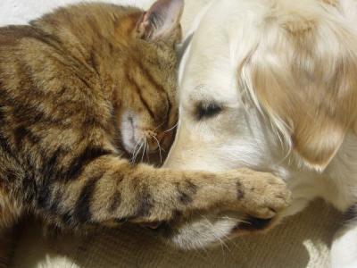 Cani e gatti nei regolamenti condominiali: via alla proposta
