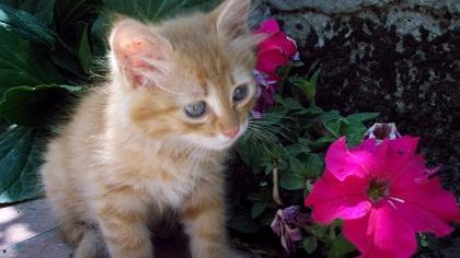 Salute, gatti fluorescenti contro l'AIDS