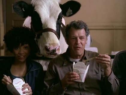 """Effetto serra? Colpa delle """"puzzette"""" delle mucche!"""