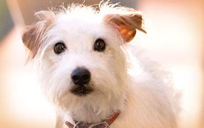 Salute, i cani proteggono dai disturbi respiratori