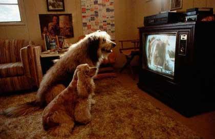 I cani? Sempre più teledipendenti!