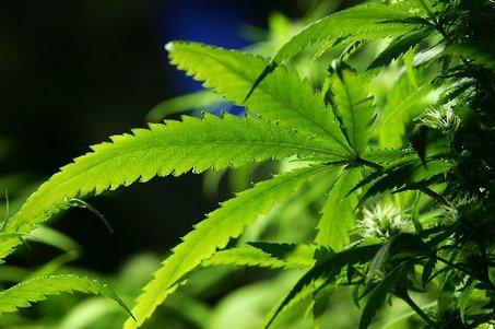 Adolescenti, la Marijuana abbassa il Q.I.