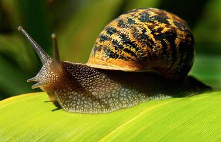 Animali, occhio alle lumache: sono pericolose per i cani!