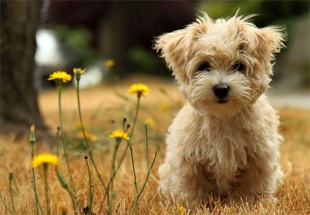 Animali, nuove regole per i padroni dei cani