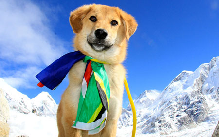 Animali, cane scala l'Everest