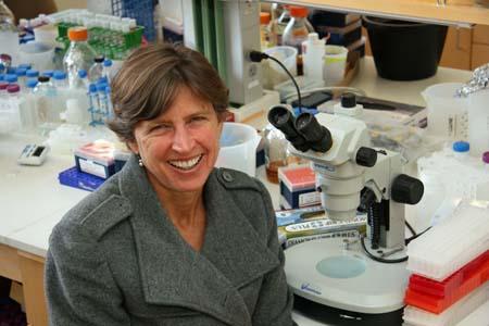 Scienza, scoperto il riso resistente ai parassiti