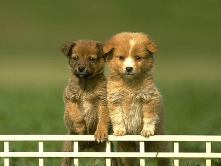 Sicilia, allarme polpette per cani avvelenate