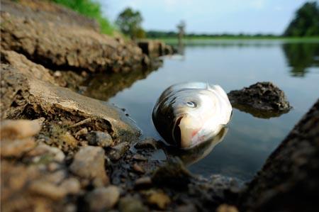 Palermo, insolita moria di pesci alla Cala