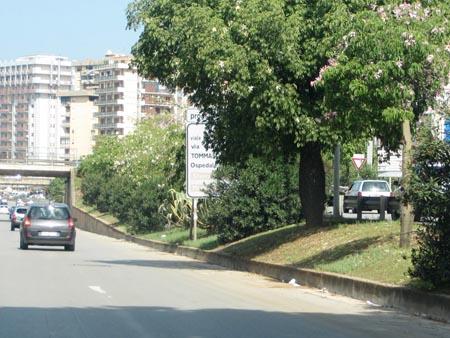 Palermo, strage di alberi storici per i lavori tranviari