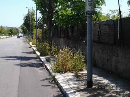 Palermo, Boccadfialco alle prese con l'erba alta