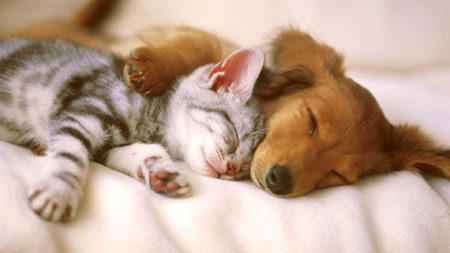Salute, coppia più felice se il sonno è in sincronia