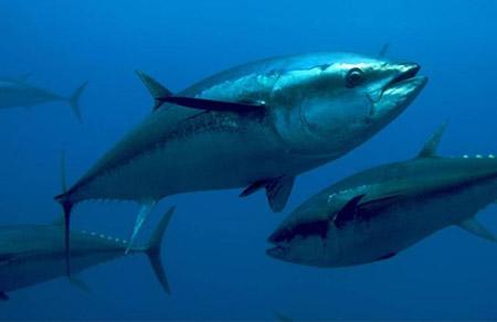 Trappeto (PA), il tonno arriva in farmacia!