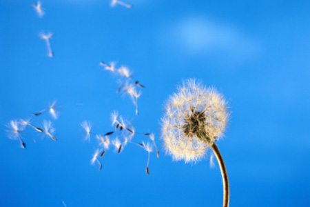 Ambiente, la CO2 aumenta i pollini: rischi per gli allergici