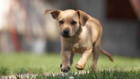 Curiosità, i cani comprendono l'umore dei padroni