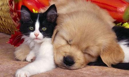 Curiosità, liti condominiali in aumento per gli animali