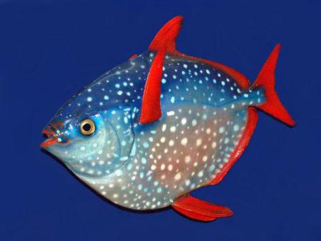 Animali, scoperto il primo pesce a sangue caldo