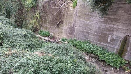 """Palermo, canale di Boccadifalco: una """"bomba biologica"""""""