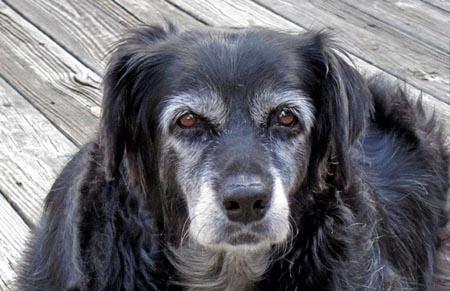 Perugia, veterinario gratis a chi adotta un cane anziano