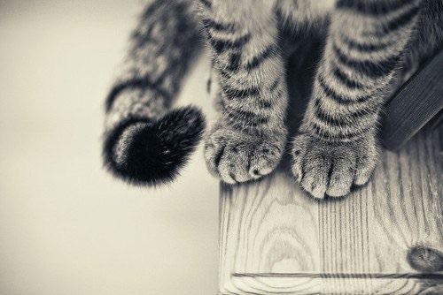 Gatti, se sono presenti nel proprio cortile si diventa responsabili