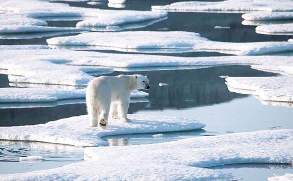 Ambiente, il Polo Nord potrebbe sparire entro quest'anno
