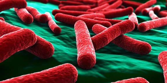 """Tumori, inventato un """"batterio autodistruttivo"""" utile nella cura"""