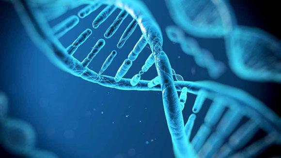 """Scienza, creata una calcolatrice con circuiti """"a DNA"""""""