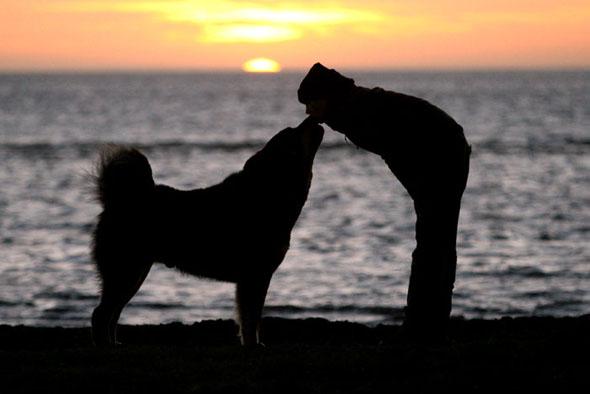 Salute, avere un cane fa bene ai cardiopatici preservando il loro cuore