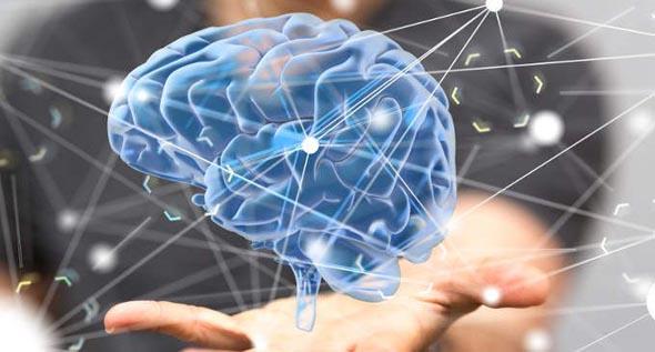 Cervello - Scoperta la centralina che regola l'invecchiamento