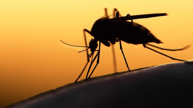 Cancro - Il Virus Zika potrebbe combattere il tumore al cervello