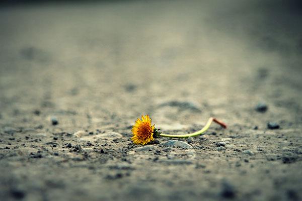 Il dolore che conosciamo e sentiamo solamente noi