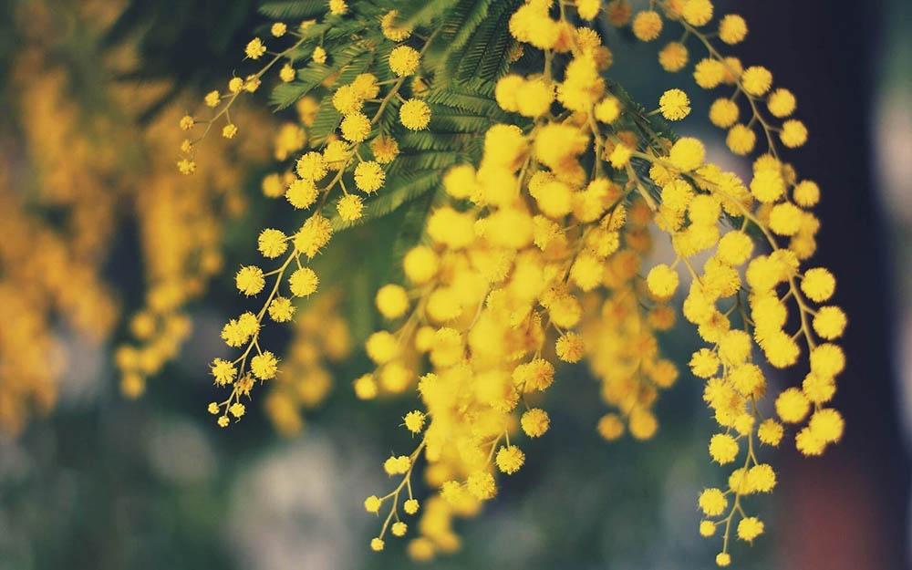 L'odore di quelle prime sere verso la primavera
