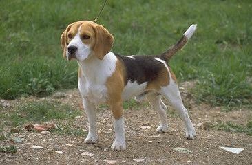 La storia (vera) di un cane divenuto folle per un addio