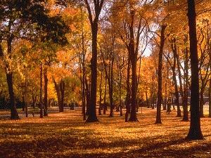 La lenta scia dell'autunno
