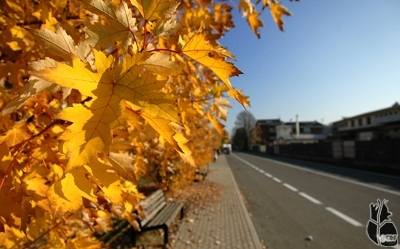 Inconfondibili segnali d'autunno