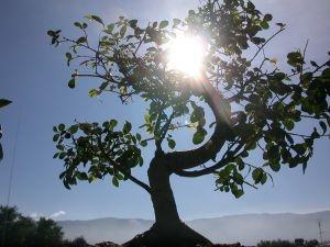 La luce che filtra dai giardini