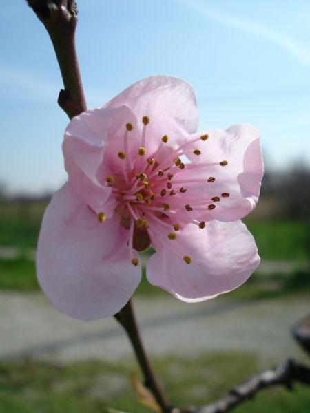 La primavera torna a farci visita