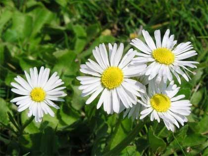 """Domenica di caldo e di """"odore di fiori"""""""